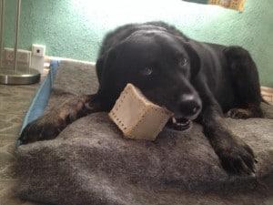 Hvad vores hund lærte os om indholdsstrategi